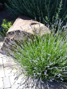 Hillside Retreat - contemporary - landscape - other metro - Heart Springs Landscape Design, LLC Contemporary Landscape, Landscape Design, High Desert Landscaping, Spring Landscape, Outdoors, Heart, Garden, Plants, Garten