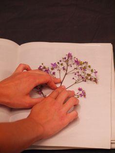 How to Press Flowers & Create Handmade Greeting Cards - Longwood Gardens Blog