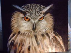 Búho Real. Acrílico sobre lienzo. 40 x 50.  2011, by Melva López.