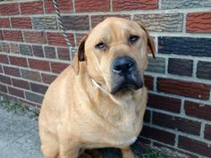 My name is GAMBIT. My Animal ID # is A0993472.