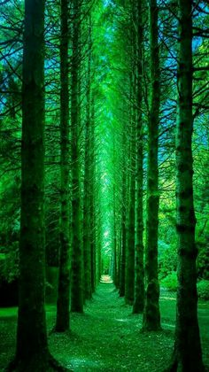 Nature photography - Emerald forest