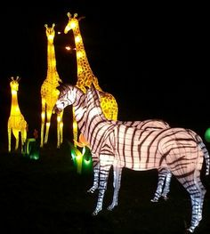 Chinese light festival lion king