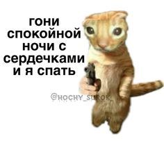 Hello Memes, Happy Memes, Reaction Pictures, Mood Quotes, Lol, Funny, Cute, Kawaii, Ha Ha