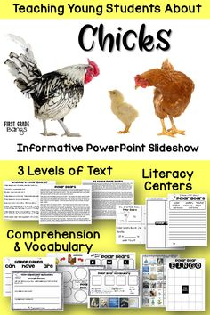 Everything you need to teach students about the chicken life cycle! Grades K-3.