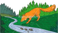 Fox Drinking River Woods Creek Drawing Vector Stock Illustration. Drawing sketch style illustration of a fox drinking from river creek with woods trees forest in the background. #illustration  #FoxDrinkingRiver