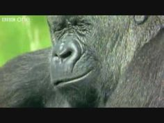 always good for a laugh - funny talking  animals...seriously u have to watch this