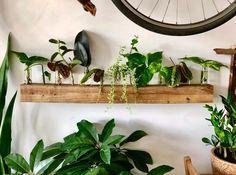 Indoor Garden, Garden Plants, Indoor Plants, Decoration Plante, Plant Shelves, Garden Shelves, Water Plants, Plant Care, Plant Decor