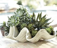 varied succulents in a giant clam shell. prefect for beach weddings.