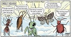 53 Best Bug Funnies Images On Pinterest Funny Stuff Funny Things