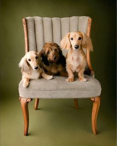 Chair buddies ... re-pinned by StoneArtUSA.com ~ pet memorials since 2001
