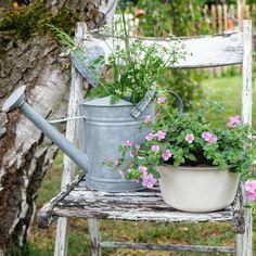 My old life. Time to look forward. Farm, Outdoor, Plants, Garden Decor, Landscape, House Plants, Outdoor Space, Garden