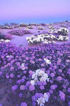 Violett - Flieder - Lila - Lavendel Violett - Flieder - Lila - Lavendel Indoor Plants: How They Purple Love, Purple Stuff, All Things Purple, Purple Rain, Shades Of Purple, Purple Flowers, Lavender Flowers, Periwinkle, Light Purple