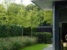 City Gardening M - Anne Laansma Tuinen Modern Garden Design, Backyard Garden Design, Love Garden, Landscape Design, Front Gardens, Formal Gardens, Outdoor Gardens, Modern Landscaping, Front Yard Landscaping