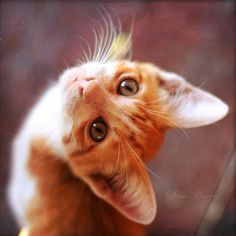 """""""An ordinary kitten will ask more questions than any 5 year old."""" - Carl Van Vechten"""