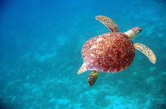 Introduction to Taking Great Underwater Photos