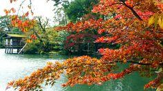 Red foliage at the Kenroku-garden, Kanazawa, Japan