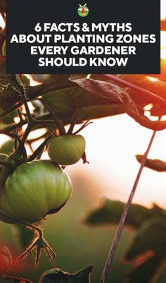 6 Facts & Myths About Planting Zones Every Gardener Should Know
