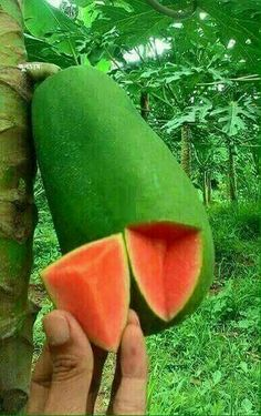 The fruit is sweet, low in calories and high in potassium and vitamin A. Papaya is also used in drinks, jellies, salads, desserts and is also dried and candied. Fruit Plants, Fruit Garden, Edible Garden, Fruit Trees, Trees To Plant, Types Of Fruit, Fruit And Veg, Fresh Fruit, Weird Fruit