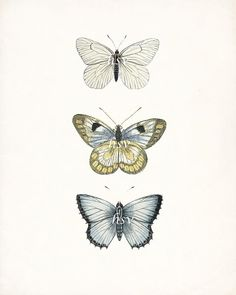 Vintage Butterfly Collection Giclee Art Print by HighStreetVintage