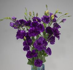 Dark Purple Lisianthus Floral Wedding, Wedding Colors, Wedding Flowers, Cadbury Purple Wedding, Lavender Centerpieces, Hummingbird Plants, Our Wedding, Wedding Ideas, Flower Names