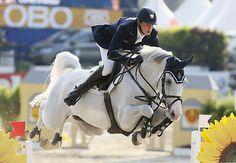equestrian hunter jumper dressage horse