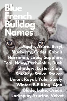 When you are anxiously waiting for your French Bulldog and you're thinking about names...Agate, Azure, Beryl, Blueberry, Cadet, Cobalt, Harriman, Lapis, Sapphire, Teal, Navy, Periwinkle, Dusk, Shadow, Luster, Slate, Smokey, Stoke, Stoker, Union, Royal, Yale, Steely, Winter, B.B.King, Ajax, Blade, Lake, Ocean, Larkspur, Azurine, Velvet #FrenchBulldog #FrenchBulldogs #FrenchBulldogpuppy #FrenchBulldogpuppies #TheFrenchBulldog #cuteFrenchBulldogs #FrenchBulldogVideos #Frenchies #BlueFrenchBulldogs French Bulldog Names, French Bulldog Blue, French Bulldog Puppies, French Bulldogs, French Bulldog Pups, Blue French Bulldogs
