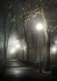 Love the foggy look it's so Eerie! Night Photography, White Photography, Autumn Photography, Travel Photography, Night Photos, Belle Photo, Beautiful Images, Mists, Paths