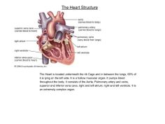 The heart structure (Human Biology)