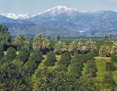 View from ford hill redlands ca places i 39 ve lived - Interior design institute orange county ...
