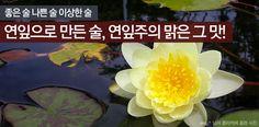 우리 술 이야기 14 - 연잎으로 만든 술, 연잎주의 맑은 그 맛! http://www.insightofgscaltex.com/?p=29151