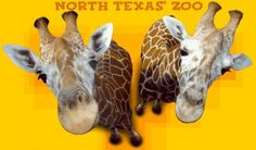 Frank Buck Zoo, Gainesville, TX