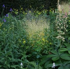 Luciano Giubbilei's garden for Laurent-Perrier