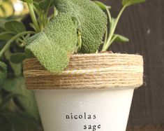 Browse unique items from PlantPuns on Etsy, a global marketplace of handmade, vintage and creative goods. Herbs Indoors, Unique Plants, Start Writing, House Plants, Planter Pots, Wordpress, Creative, Handmade, Etsy