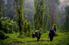 Kokoda Trail  Google Image Result for http://www.mymilez.com/wp-content/uploads/2012/01/kokoda.jpg