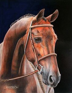 Horse in Colored Pencil. Original Artwork.Lori Lamberson