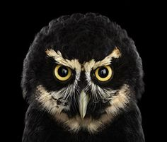 Owl photographed by Brad Wilson for project Affinity