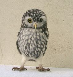 Helen Priem owl