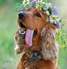 O primăvară frumoasă! Mai mulți câini și pisici îți oferă mărțișoare. FOTO | LumeAnimalelor.ro: Informaţii non-stop despre câini şi pisici.