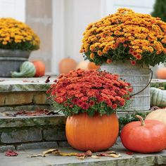 Fill smaller gourds with pansies to create trio with mums