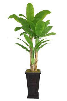 Laura Ashley VHX117201 91-Inch Banana Tree with Real Touch Leaves in 16-Inch Fiber Stone Planter >>> See this great product.