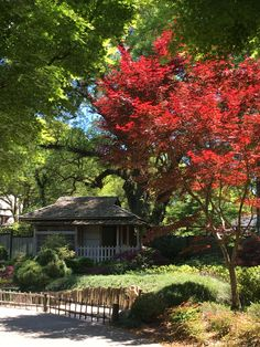 Tea house in Japanese Tranquility Garden at Wilmington Arboretum Spring 2018