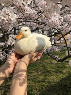 I had a duck just like this one I love ducks Cute Baby Animals, Farm Animals, Animals And Pets, Funny Animals, Cute Creatures, Beautiful Creatures, Animals Beautiful, Pet Ducks, Baby Ducks