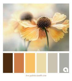 Warm Colors w/ Gray Colour Pallette, Colour Schemes, Color Combos, Color Patterns, Color Harmony, Color Balance, Design Seeds, Paint Colors For Home, Colour Board