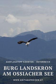 Wo Adler und Falken auf einer Burg wohnen - der Ausflugstipp für Kärnten mit tierischen Begegnungen und herrlichen Panoramablicken. Jetzt mehr erfahren über die Sehenswürdigkeit in den Alpen. #burg #landskron #ossiacher #see #alpen #kärnten #österreich #ausflugsziel #tipp #sehenswürdigkeiten #natur #adler #falken #flugschau #adlerarena #karawanken #familie Klopeiner See, Bergen, Movies, Movie Posters, Inspiration, Europe, Fall Landscape, Villach, Summer Vacations
