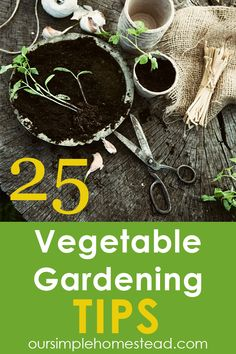 25 Vegetable Gardening Tips I have an old book that I devour every year, and I especially pull it out for vegetable gardening tips. My favorite part of the book is reading about old-time planting lore. #gardeningtips #vegetablegardening