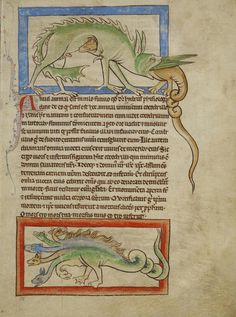 A hydrus and a hydra. Same beast, different genders?