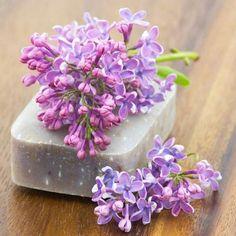 Seife herstellen - Seifen-Rezept: Seife mit Fliederduft selber machen