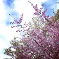 Hello Spring!  .