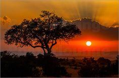 Ingo Gerlach - Akazie und Sonnenuntergang   Dieses wunderschöne Motiv gibt es jetzt als Poster oder Leinwandbild.