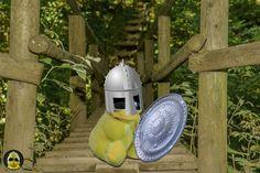 Lasset die #Dschungel-Spiele beginnen, ich bin bereit! #ibes #ibes2019  #bigb #bigbird #cooler #gelber #erpel #enterich #vogel #gelbe #ente #schrader #beckum #yellow #duck #bird #plüschi #plushie #plüschtier #kuscheltier #stofftier #schmusetier #fotografier_dein_kuscheltier Blog, Home Appliances, Jungles, Stuffed Toys, Bird, Games, House Appliances, Kitchen Appliances, Blogging